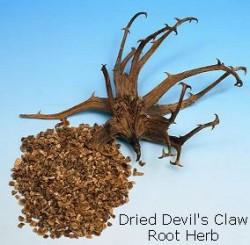 devils-claw-dried-herb